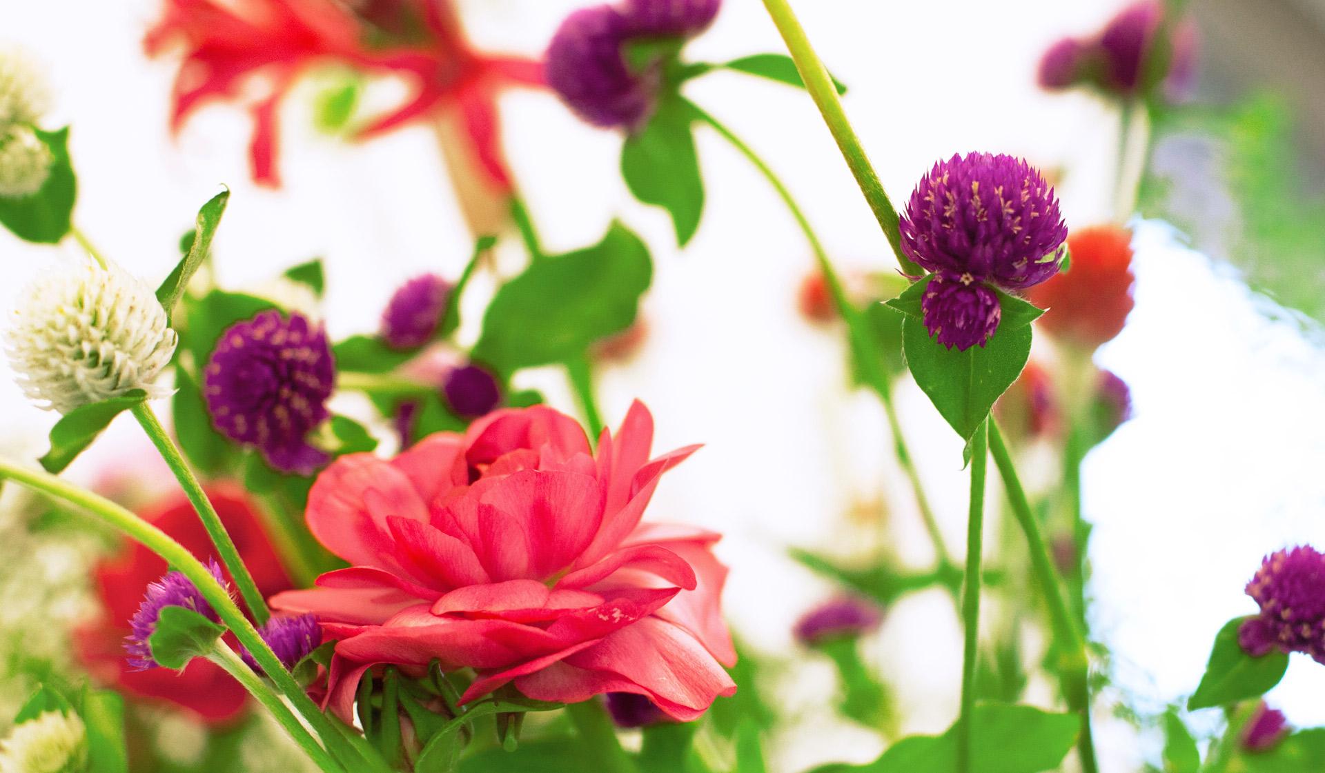 Blumen in den Praxisräumen der Gemeinschaftspraxis Brinkmann Ceccarelli